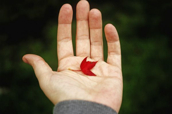 hand holding little red leaf |  How to Define Gratitude + Have a Better Holiday Season  https://positiveroutines.com/define-gratitude/