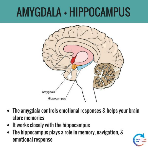 Amygdala hippocampus stress and the brain positive routines amygdala hippocampus stress and the brain what you need to know about stress and the ccuart Gallery