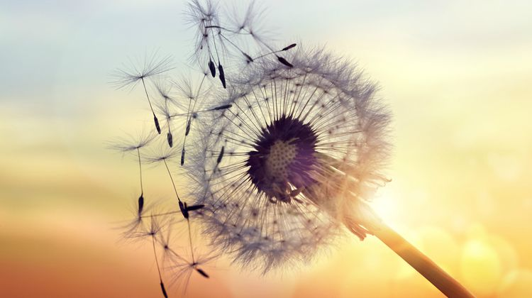 dandelion blowing in the wind | 82+ Quotes About Changing That Will Transform Your World  https://positiveroutines.com/quotes-about-changing/
