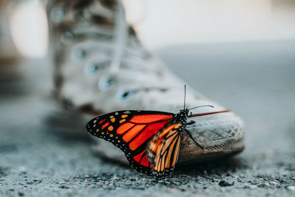 butterfly resting on sneaker | Why is Nature Important to Happiness  https://positiveroutines.com/why-is-nature-important-happiness/